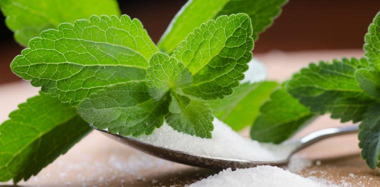 La stevia un dolcificante naturale e ipocalorico belli for Stevia pianta