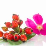 Tutti i motivi per usare l'olio di rosa mosqueta