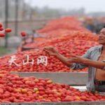 I pomodori cinesi e il grano canadese non tutelano i consumatori