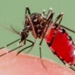 Come fare scappare le zanzare: consigli pratici ed efficaci