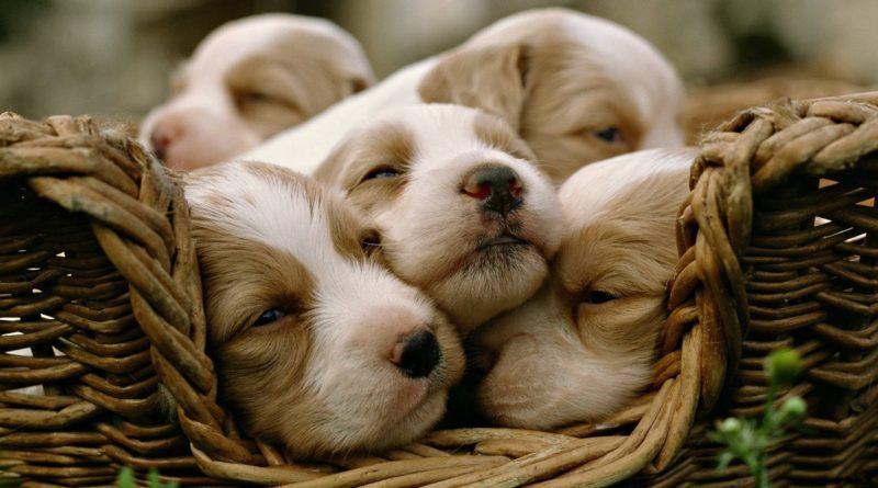 Cuccioli antistress