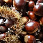 Alimenti autunnali per eccellenza: perché mangiare le castagne?