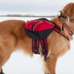 Cappotto per il cane contro il freddo: serve sempre?