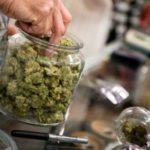 Cannabis legale: appello dell'Associazione Coscioni