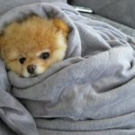 Come proteggere gli animali dal freddo: consigli per cani e gatti