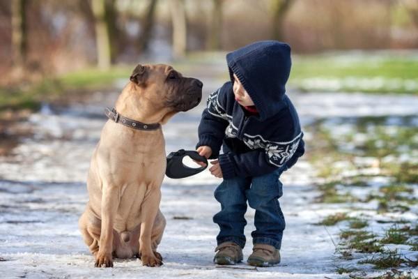 effetti benefici dei cani sui pazienti