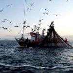 La pesca elettrica sarà vietata anche nel Mare del Nord
