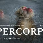 Ipercorpo: il festival internazionale delle arti dal vivo a Forlì