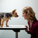 Il legame fra animali e padroni e lo stress
