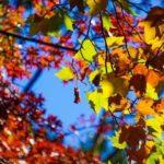Autunno: come affrontare la stagione in salute