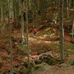 Foreste: 12 milioni dalla Regione Toscana per azioni a tutela