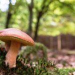 Andare per funghi: i consigli e le regole per evitare inconvenienti