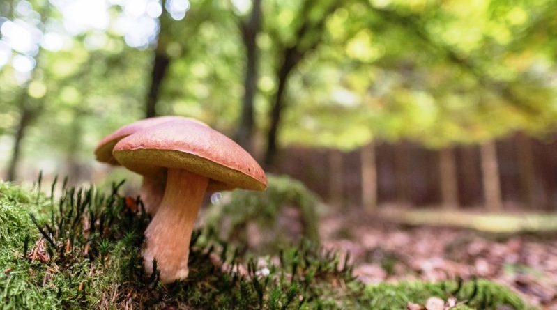 Andare per funghi