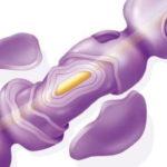Sclerosi multipla: individuate le cellule che ne consentono lo sviluppo