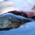 Esame di pesca superato da 154 nuovi pescatori bolzanini