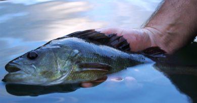 Esame di pesca