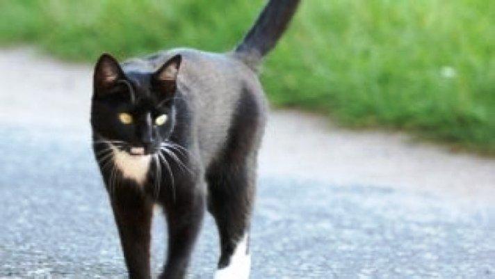 Gatti con zampe dal pelo chiaro