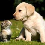 I cani domestici potrebbero funzionare come sentinelle biologiche ambientali