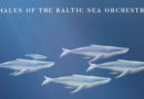 Whales of the Baltic Sea Orchestra