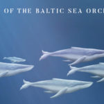 Whales of the Baltic Sea Orchestra: il nuovo video tratto da un brano di Desdemona