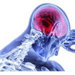 Il sistema Endocannabinoide, cos'è? La sua importanza per sistema immunitario e cervello