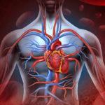 Sistema cardiovascolare: quando può darci preoccupazioni