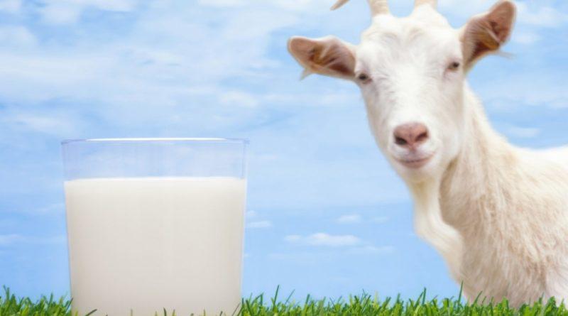 latte di capra