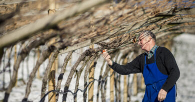 Fissati nuovi criteri di incentivazione per le piccole e medie imprese agricole (Foto: IDM/Florian Andergassen)
