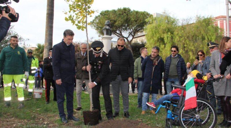 festa Albero Barletta - immagine Comune
