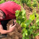 La famiglia Moratti firma un nuovo capitolo del suo umanesimo vitivinicolo con una cantina a Neoneli