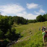 Processionaria del pino nei territori del Parco Nazionale della Sila: è allarme
