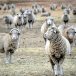 Zootecnia: domande per gli aiuti alla monticazione 2021 in Valle d'Aosta