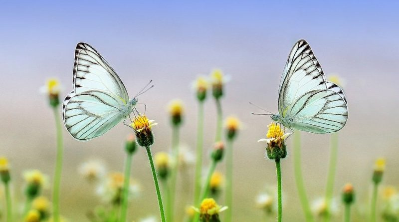 farfalle - ph pixabay