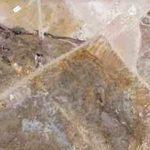 Bolca: nuovi eccezionali ritrovamenti al Museo di Storia Naturale di Verona